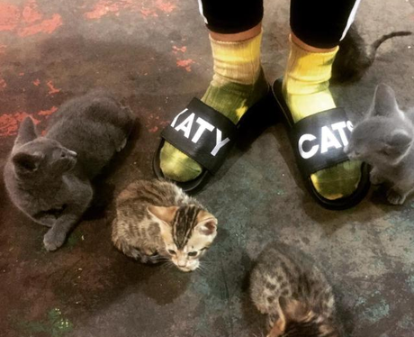 Katy Perry with Cats