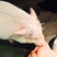 Image 10: Miley Cyrus kissing a pig