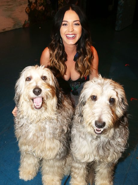 katy Perry with her dogs
