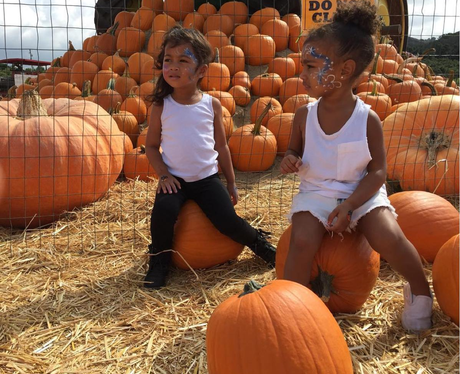 North West Pumpkin Patch