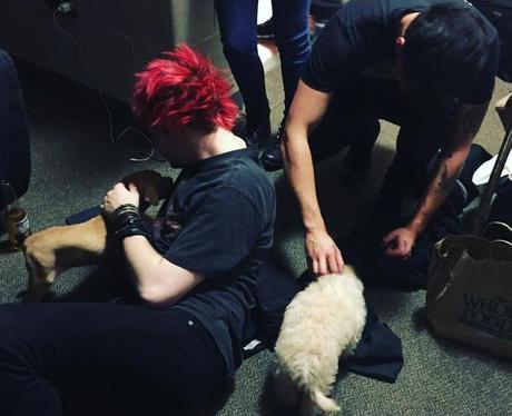 5 Seconds Of Summer Puppies Instagram