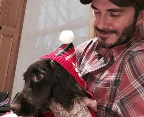 David Beckham with dog wearing christmas hat