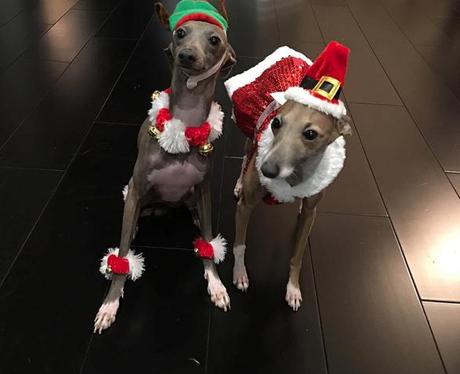 Kylie Jenner Christmas Dogs Instagram