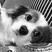 Image 1: Charlie Puth's dog Brady
