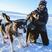 Image 10: Ellie Goulding in the snow with huskies