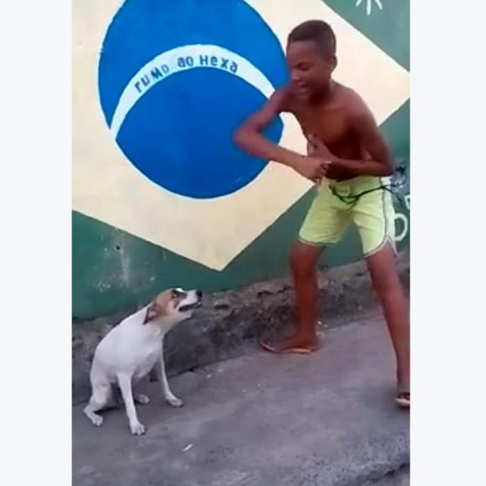 Twerkin Dog Viral