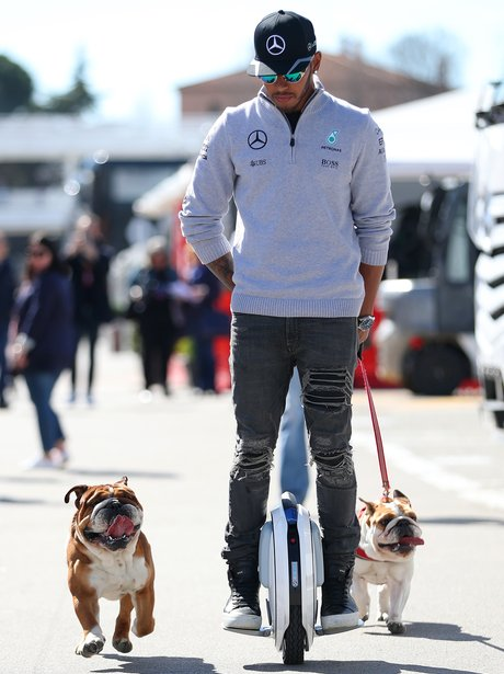 Lewis Hamilton and pet dogs