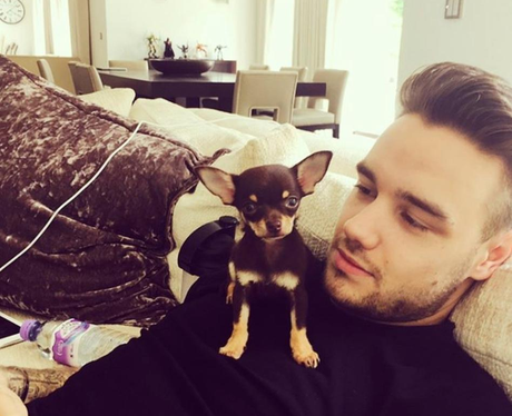 Cheryl and Liam Payne get a new addition to their