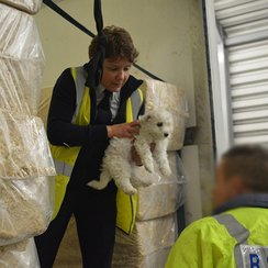 Puppies being rescued from illegal trade at Holyhe