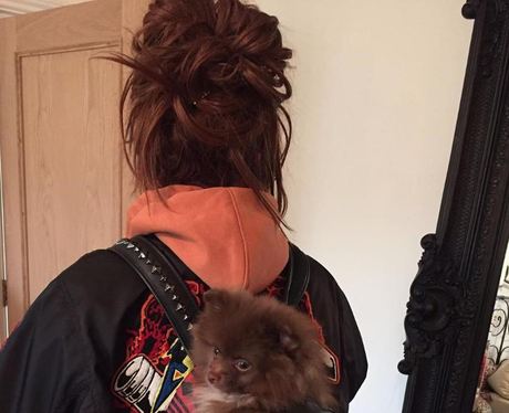 Jesy Nelson puppy