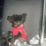 Image 8: Bebe Rexha's dog