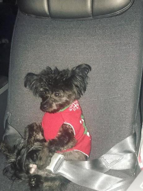 Bebe Rexha's dog
