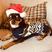 Image 7: Cheryl's dog