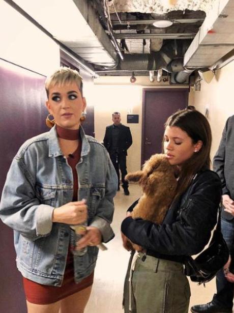 Sofia Richie loving Katy Perry's dog Nugget