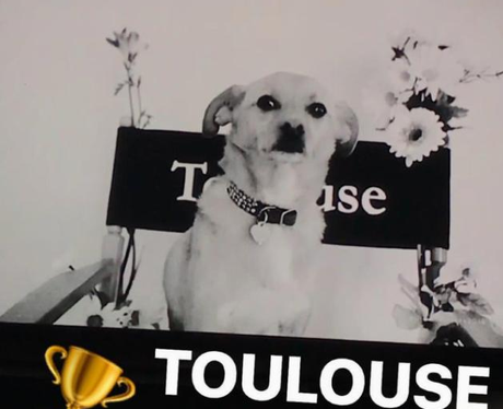 Ariana Grande Dog Wins Award Twitter